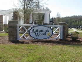 autumn's woods (1)